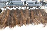 Продажа волос!при покупке наращивание в подарок!