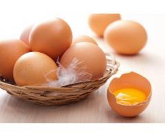 Яйцо домашнее.