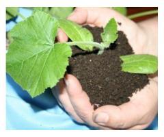 Производим биогумус, вермикомпост