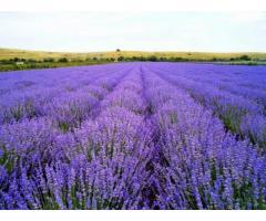 Продается специализированное сельхозпредприятие в Крыму