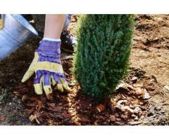 Озеленение, высадка и обрезка деревьев, газоны, ландшафты, системы полива.