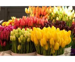 Тюльпаны оптом под срез к 8 марта. Высокое качество Крым 2021